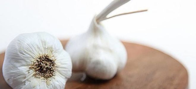Как используют чеснок от насморка